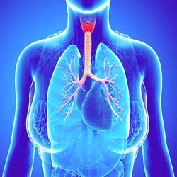 Бронхиальная астма приступ