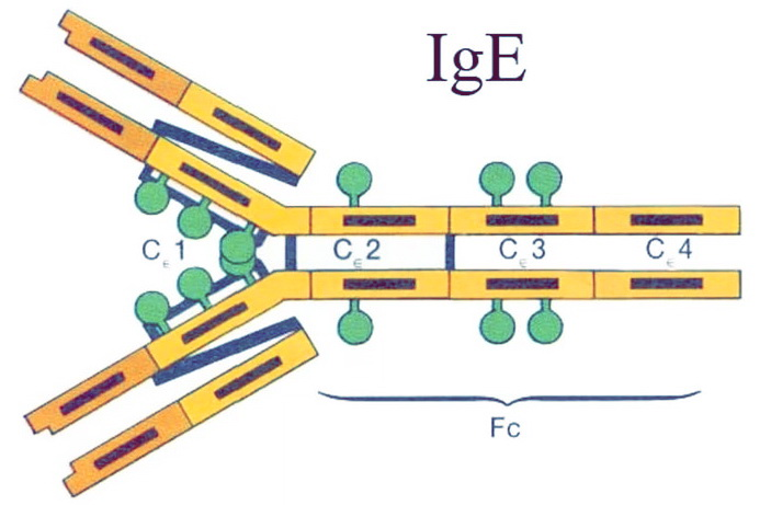 Уровень синтеза IgE антител
